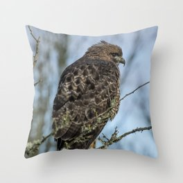 Immature Red-Tailed Hawk Dark Morph Throw Pillow