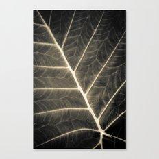Leaf Patterns Canvas Print
