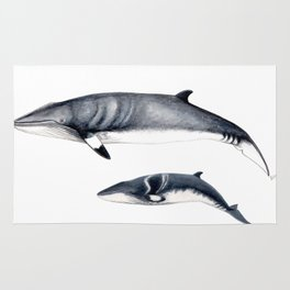 Minke whale with baby whale Rug