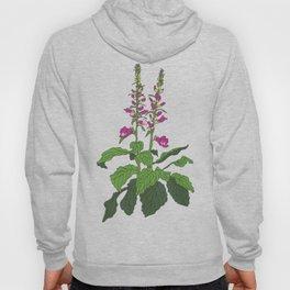Foxglove Flower Garden Illustration Hoody