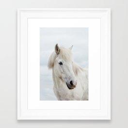 Icelandic Horse Framed Art Print