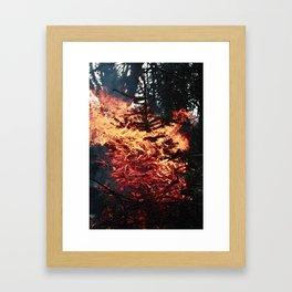 Fir Flames Framed Art Print