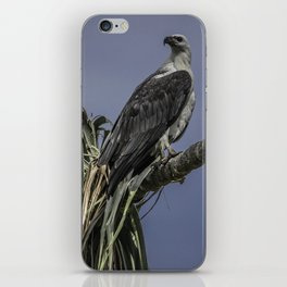 White-Bellied Sea Eagle iPhone Skin