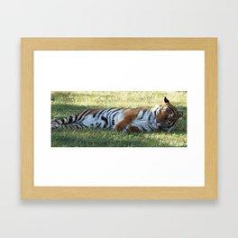Lazy Tiger Framed Art Print