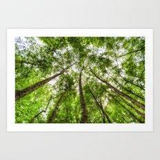 The Ancient Tree Canopy Art Print