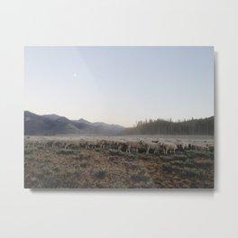 Sheep Dust Metal Print