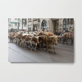 Longhorn cattle attract a crowd at the National Western Stock Shows kickoff parade in downtown Denve Metal Print