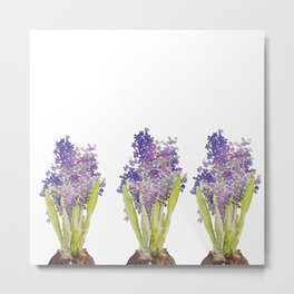 Hyacinth - watercolor  Metal Print