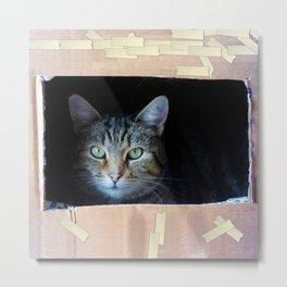 Cat In The Box Metal Print