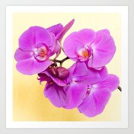 Purple Orchid on Pastel Yellow Art Print