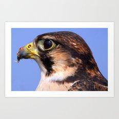 Lanner Falcon's Profile Art Print