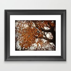 Colors Thriving As The Leaves Are Dying Framed Art Print