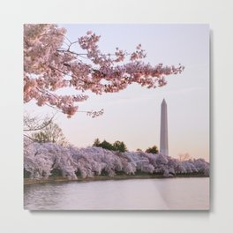 Cherry Blossom Sunrise In Over The Tidal Basin Metal Print