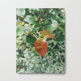 Plantae V Metal Print