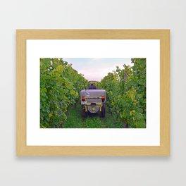 Vineyard Harvest Framed Art Print