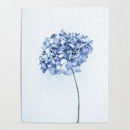 Hydrangea Blue 2 Poster