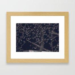 Caught in a Web Framed Art Print