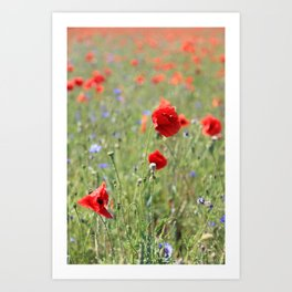 poppy flower no8 Art Print