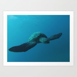 Sea Turtle Encounter Art Print