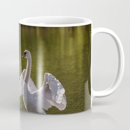 Mute swan swims in the river waters spreading its large wings Coffee Mug