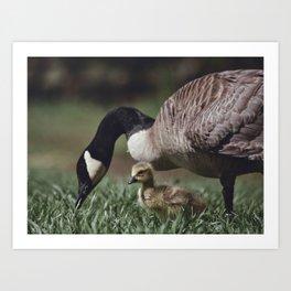 Baby Goose Art Print