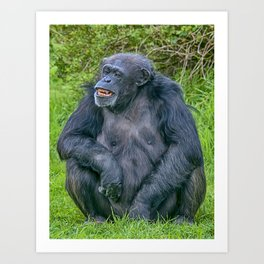 Grinning Chimp Art Print