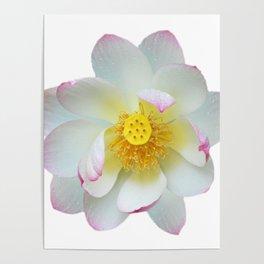 Lotus flowers posters society6 lotus flower poster mightylinksfo