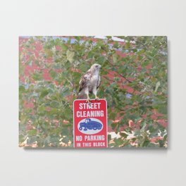 No Parking Hawk 3 Metal Print