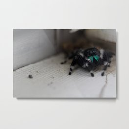 Jumping Spider Metal Print