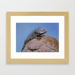 Iguana from Aruba Framed Art Print
