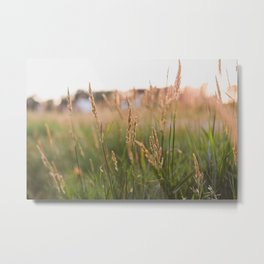 Countryside Summer Sunsets Metal Print
