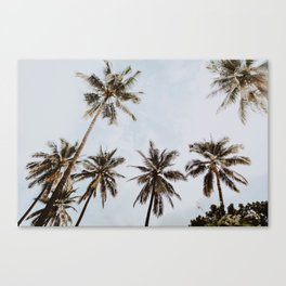 palm trees xiv / chiang mai, thailand Canvas Print