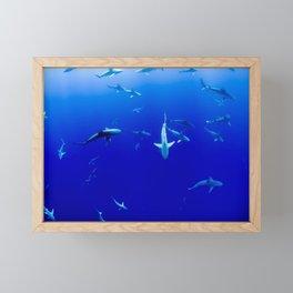 Party Sharks Framed Mini Art Print