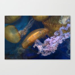 Pacific Sea Nettles Jellies Canvas Print
