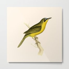 Grey-crowned Tanager Bird Illustration by William Swainson Metal Print