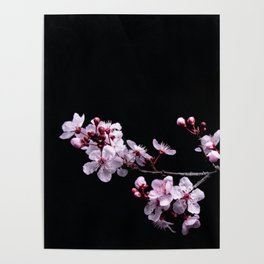 Flower Photography by David Brooke Martin Poster