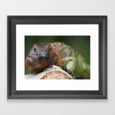 Colorful Iguana Framed Art Print