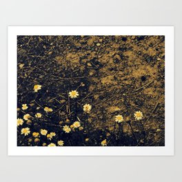 Daisys and Dirt Art Print