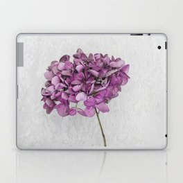 Pink Dried Hydrangea Laptop & iPad Skin