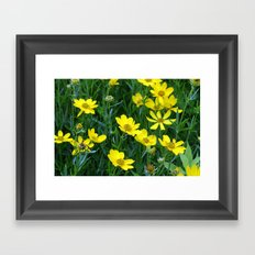 Prairie Flowers 2 Framed Art Print