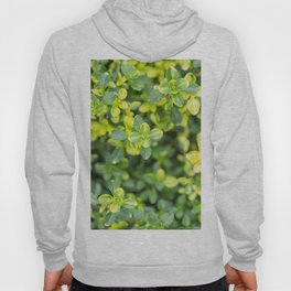 Nature floral herbal pattern Hoody