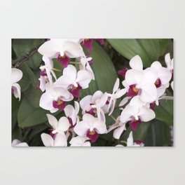 Longwood Gardens Orchid Extravaganza 1 Canvas Print