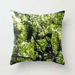Sunlight Filtering through Ferns and Palm Trees in the Lush Rainforest of Mombacho Volcano, Nicaragu Throw Pillow