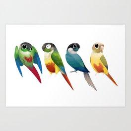 Green cheek conures Art Print