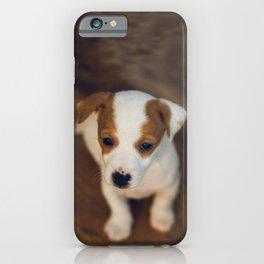 Little puppy dog iPhone Case