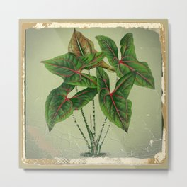 Grungy antique style  Botanical Art Metal Print