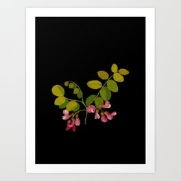 Robinia Hispida Mary Delany Delicate Paper Flower Collage Black Background Floral Botanical Art Print