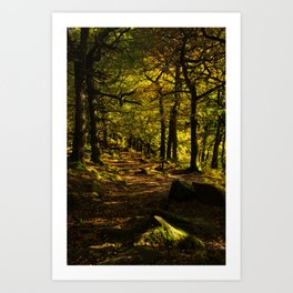 Padley Gorge Trail in Autumn Art Print