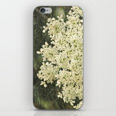 Botanical - Queen Anne's Lace, Bishops Lace Flower iPhone & iPod Skin