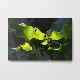 Green Contrast - Light and Dark Metal Print